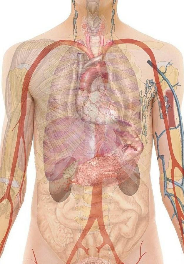 anatomy-254129_1280 (2)